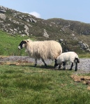 An Irish black-faced ewe and her lamb.