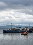 Fishing boats in Moville.